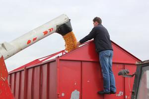 Rekordowa kukurydza