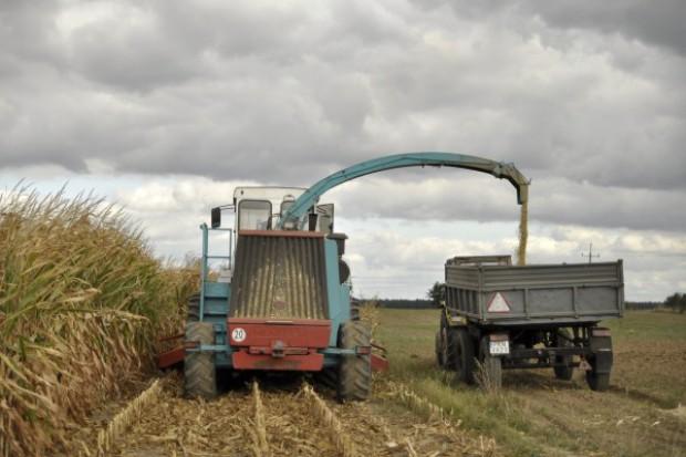 Rok 2012 przyniósł rekordową produkcję kukurydzy