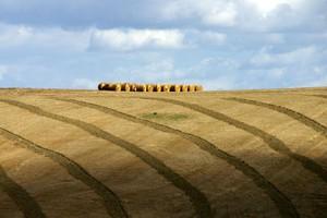Ziemia rolna będzie drożała