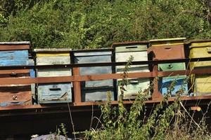 Prokuratura umorzyła dochodzenie ws. zatrucia pszczół