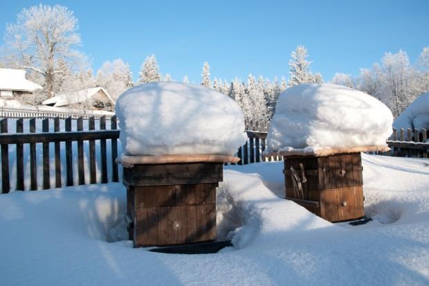 Pszczoły w zimie