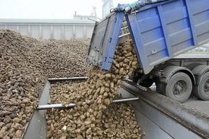 Polski interes jest sprzeczny z liberalizacją rynku cukru