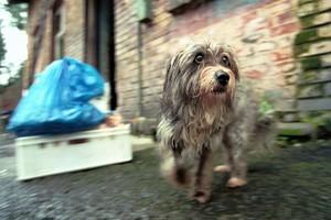 Dział specjalny płaci podatek za psa