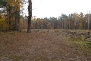 Wystarczy pieniędzy na zalesianie