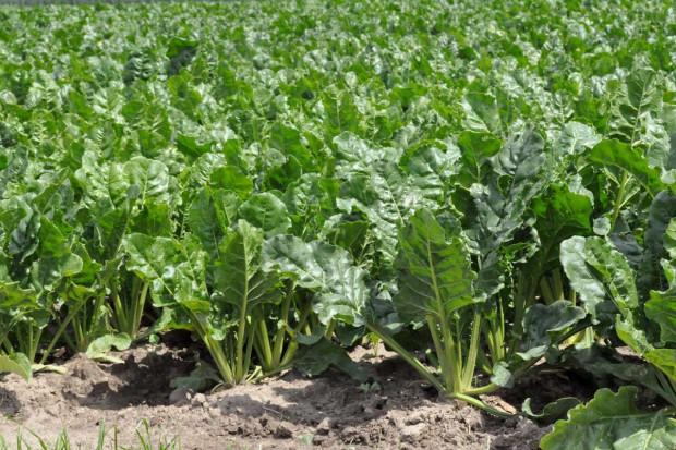 Odczyn gleby podstawą nawożenia