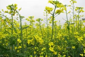 Europa zmierza do wprowadzenia utrudnień w rolnictwie?