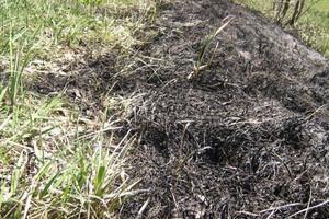 Za wypalanie traw grożą kary i utrata części dopłat