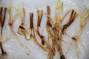 Sprawdź jaka jest kondycja roślin