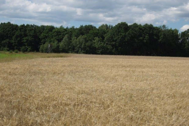 Rolnicy zasypują ANR ofertami kupna ziemi