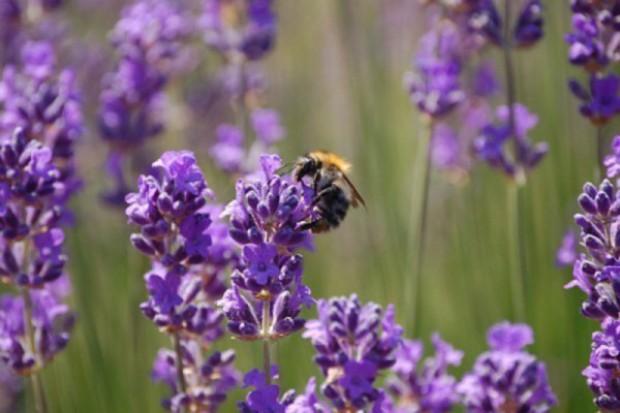 Kampania na rzecz owadów zapylających