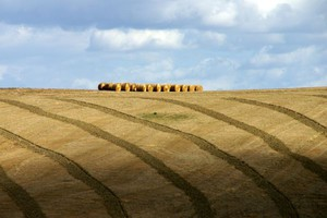 W 2012 r. zagraniczne spółki kupiły dwa razy więcej ziemi rolnej