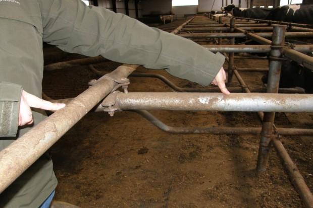 Wygodne legowiska dla krów mlecznych