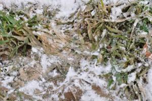 Nawożenie i bronowanie po ruszeniu wegetacji