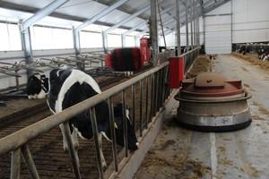 Ograniczyć sortowanie dawki przez krowy