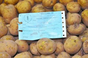 Ziemniaki do uprawy ekologicznej