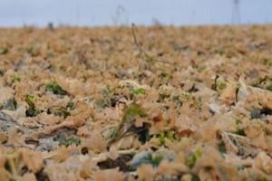 Po zimie ma przyjść deszcz – czy rośliny zgniją?