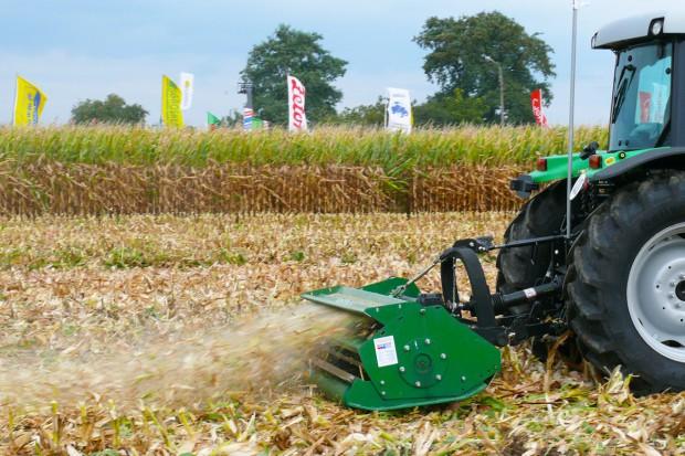 Niszcz resztki pożniwne kukurydzy