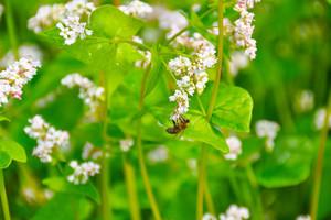 Pszczoły a pozostałości środków