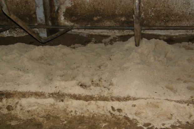 Wygodny piasek na legowiskach dla krów