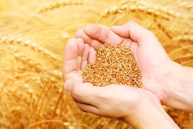 Notowania towarów rolnych w kratkę