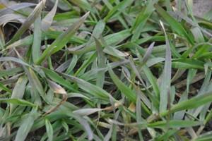Zmniejszył się areał uprawy zbóż ozimych