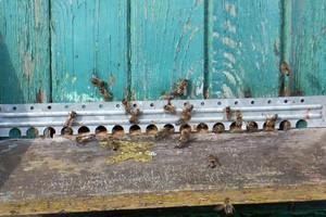 Zimy nie przetrwało 20 proc. populacji pszczół