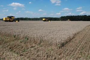 Zapowiadają się rekordowe zbiory zbóż na świecie