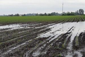 Uprawy w wodzie – lokalne wypadnięcia roślin