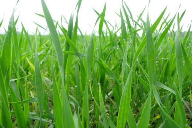 3,4 – to ocena upraw jarych w maju