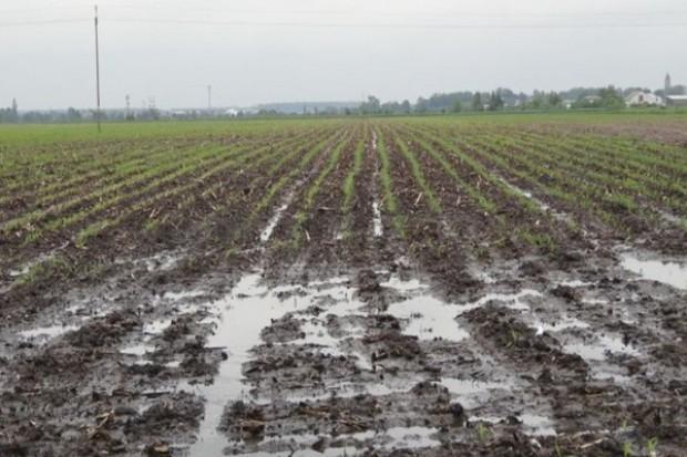 Zastoiska wodne groźne dla upraw, chwasty też