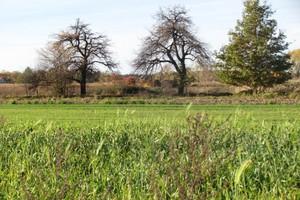 Drzewo u sąsiada – kłopot u rolnika