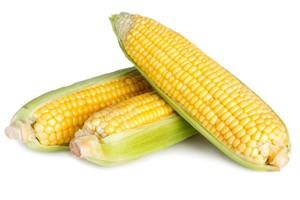KE pozywa Polskę przed Trybunał UE za uprawy GMO