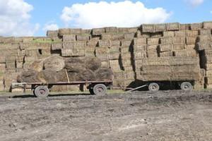 OZE nie wymagają importu surowców