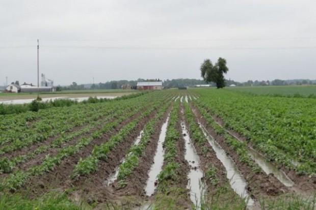 16 tys. ha upraw zniszczonych po ulewach na Opolszczyźnie