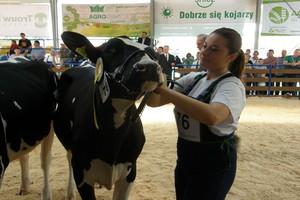 Czym więc jest hodowla bydła?