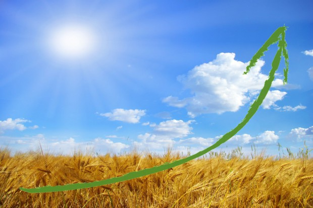 Wzrosty cen zbóż przyspieszają