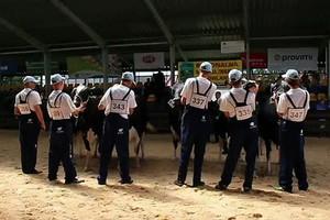 Krowy w III i dalszej laktacji