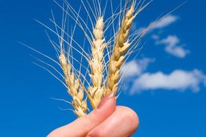 Elewarr: Niskie ceny zbóż wynikiem realiów rynkowych