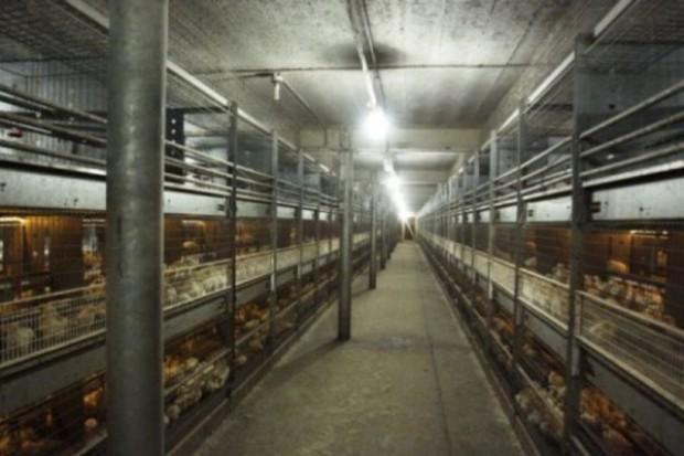 Szczegółowe kontrole na antybiotyki w gospodarstwach