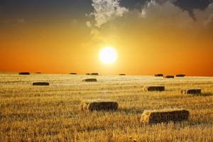 Instrumenty, które ustabilizowałyby polskie rolnictwo
