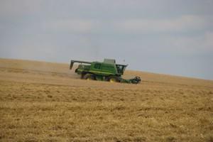 W Niemczech więcej zbóż i rzepaku, mniej ziemniaków