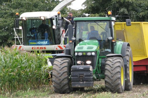 Zbiory kukurydzy kiszonkowej już blisko