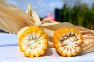 Niższe FAO było wyjściem dla kukurydzy