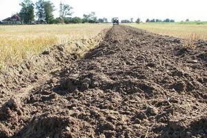 Jakie gleby lubią zboża ozime?