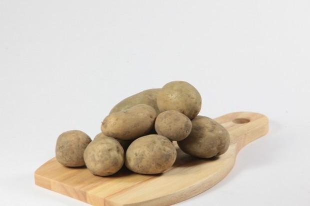 Plony ziemniaka niższe o 5-7 proc. - cena wyższa