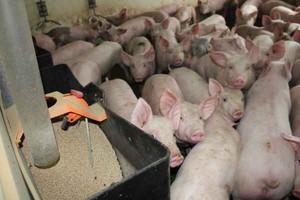 MRiRW o akcji TVN Uwaga - to szykanowanie polskiej żywności