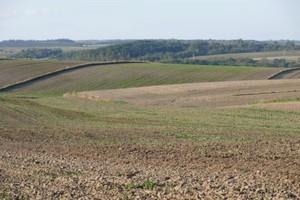 Niewiele niższy areał produkcji zbóż niż w poprzednim roku
