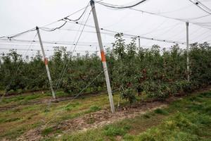 Stawiają na jabłka i nowoczesne sady