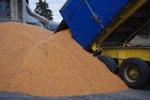 Ukraina wyeksportowała rekordowo dużo kukurydzy