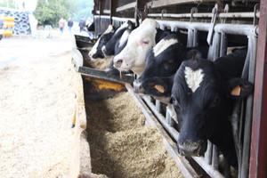 Typowe francuskie gospodarstwo mleczne